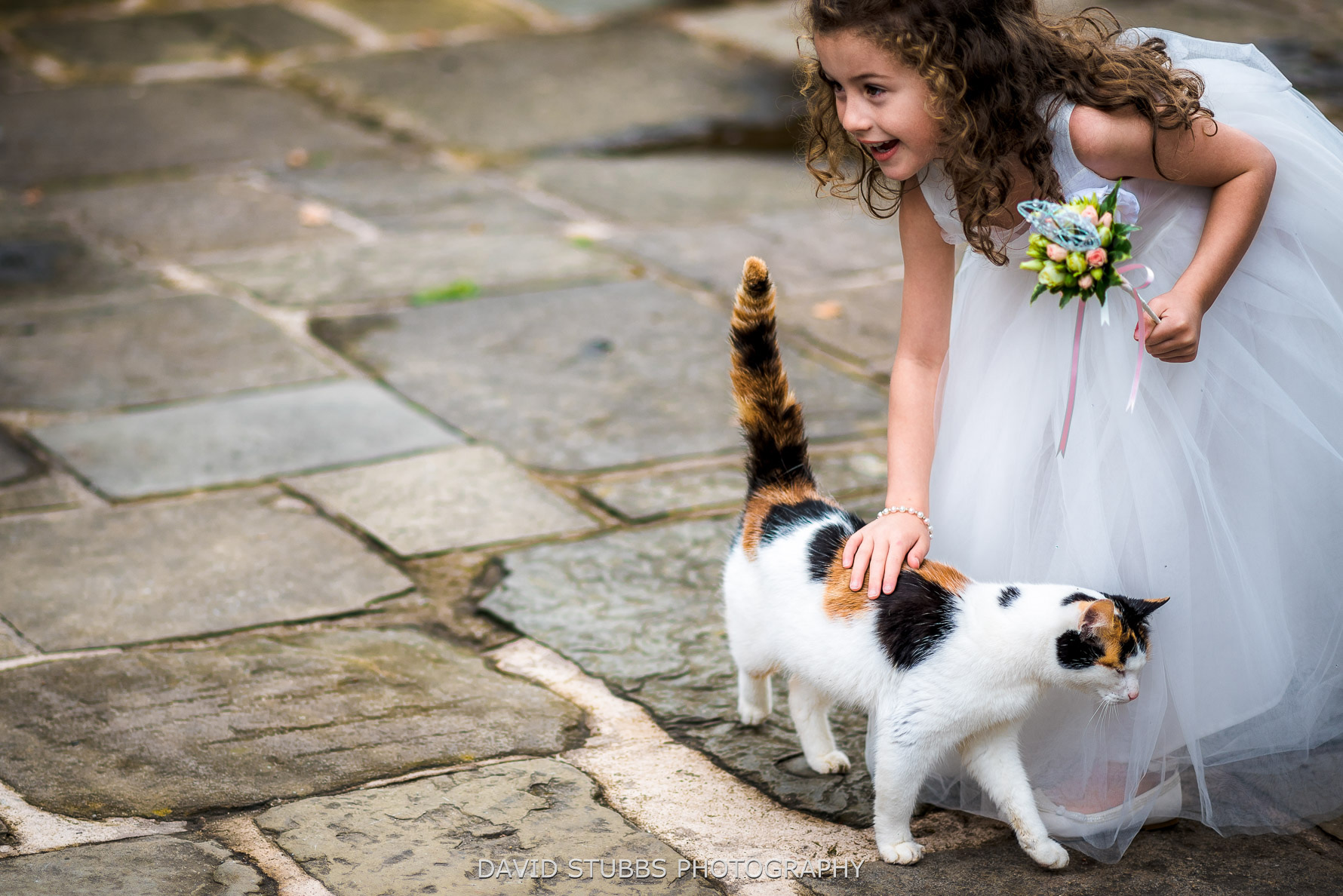 flowers and cat at wedding