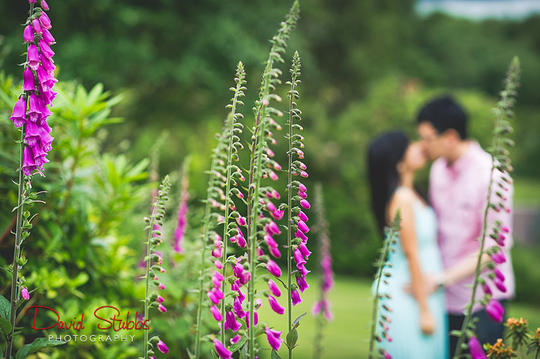 fox gloves in foreground engagement