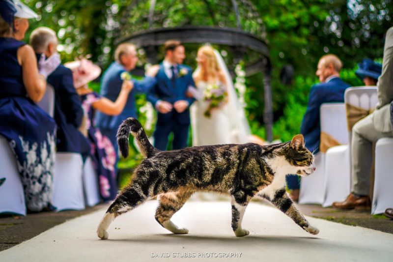 cat at statham lodge wedding