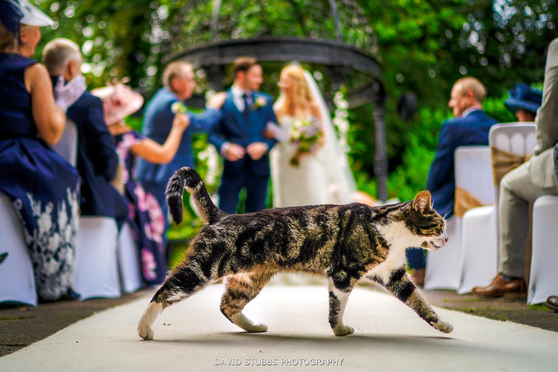 cat at statham lodge wedding