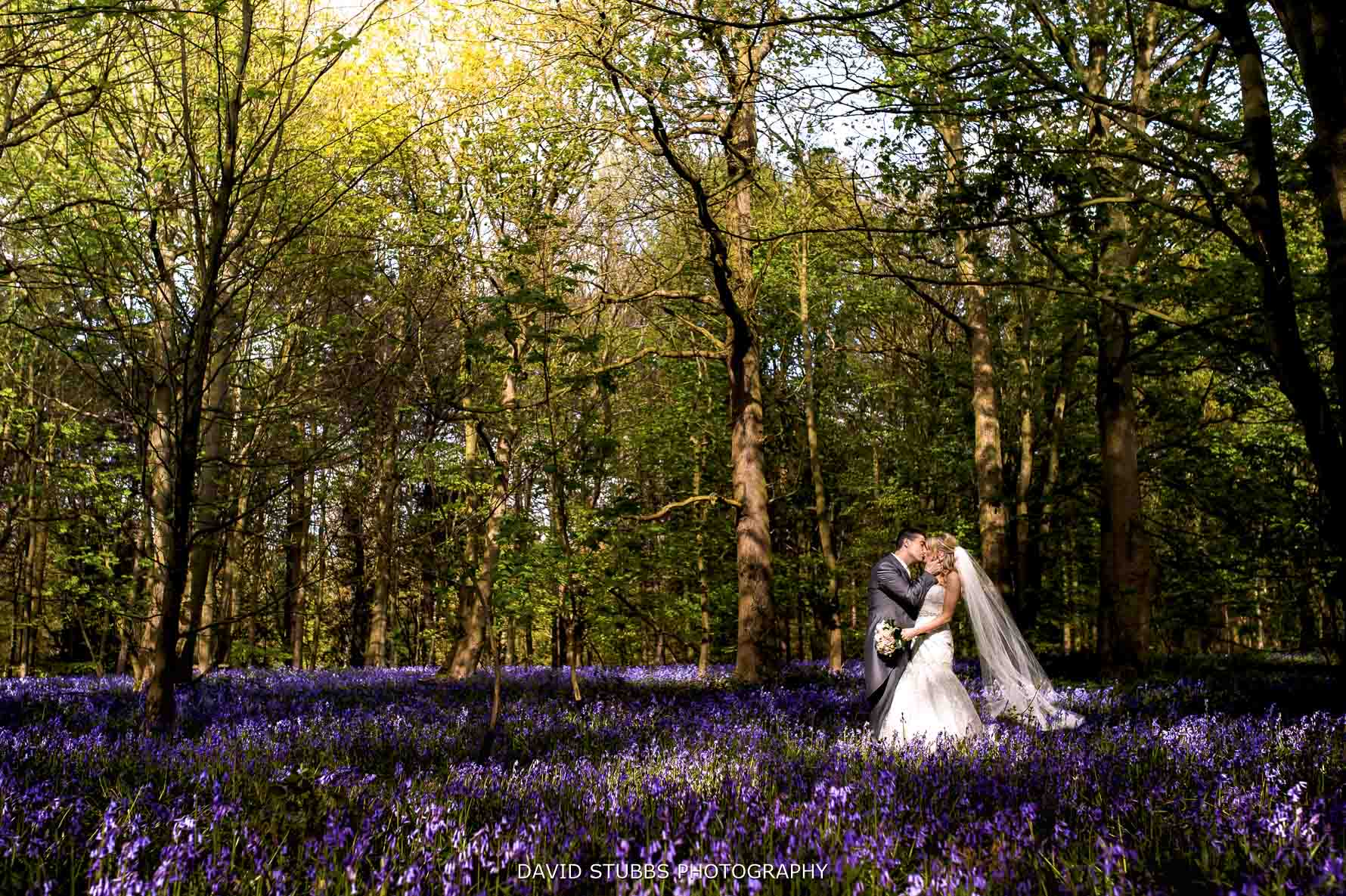 photo in bluebells at Hazlewood castle
