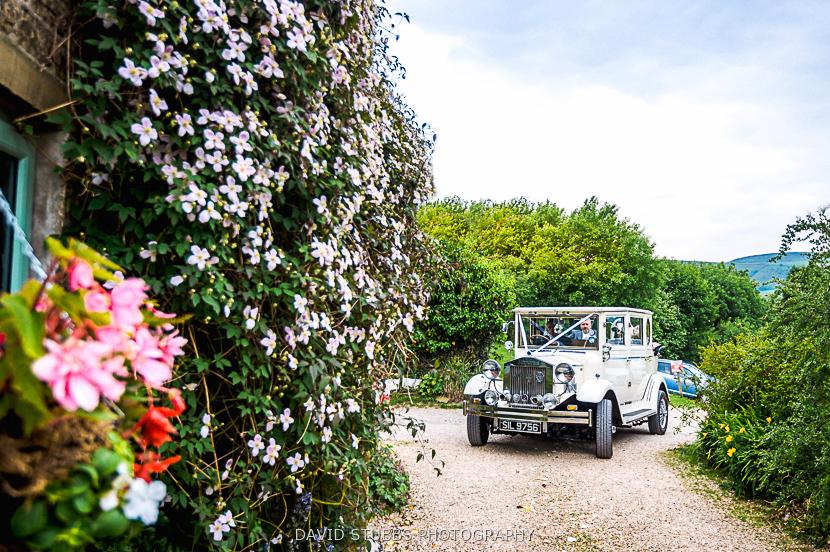 car behind bush