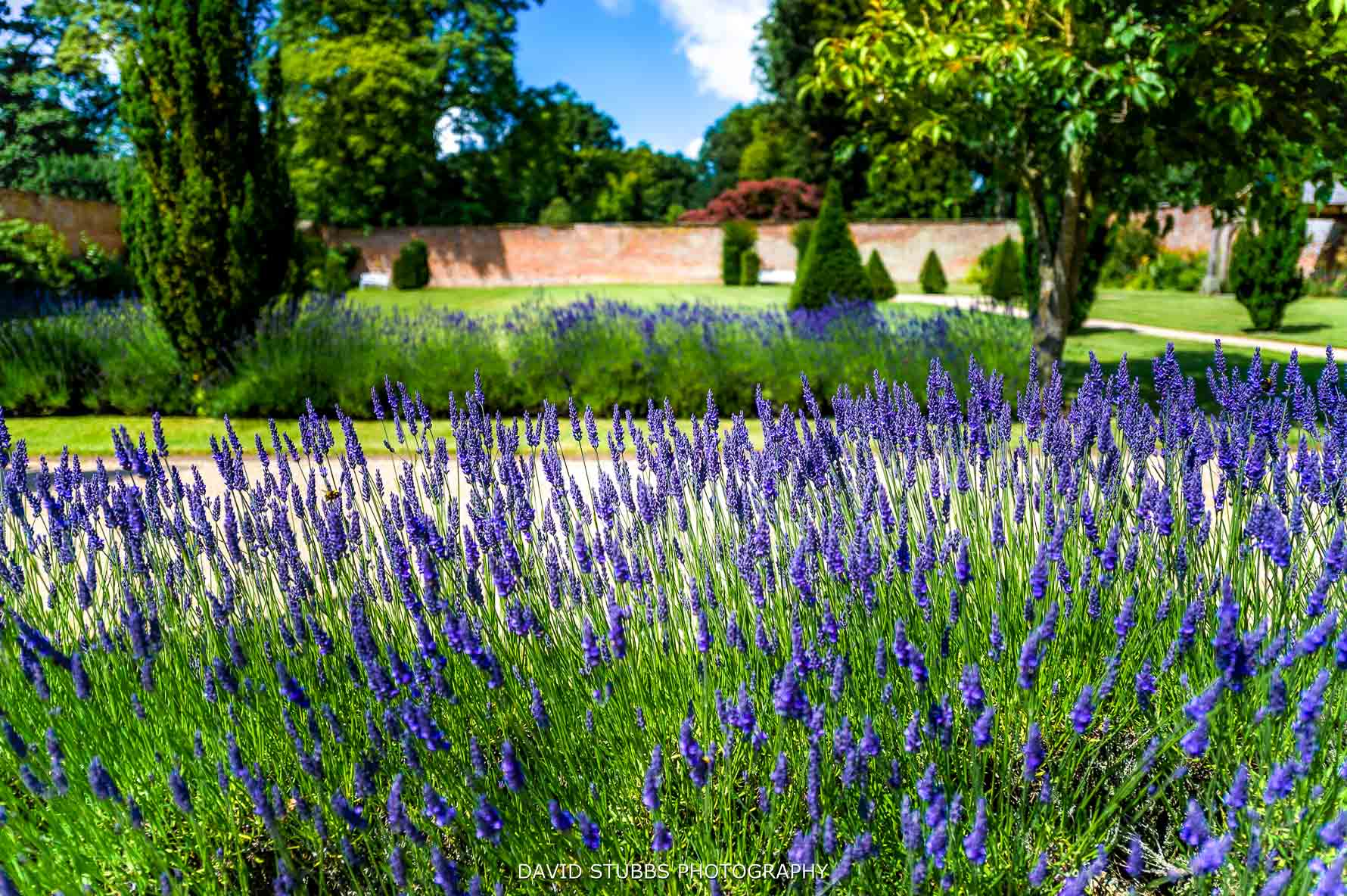 the lavender at combermere