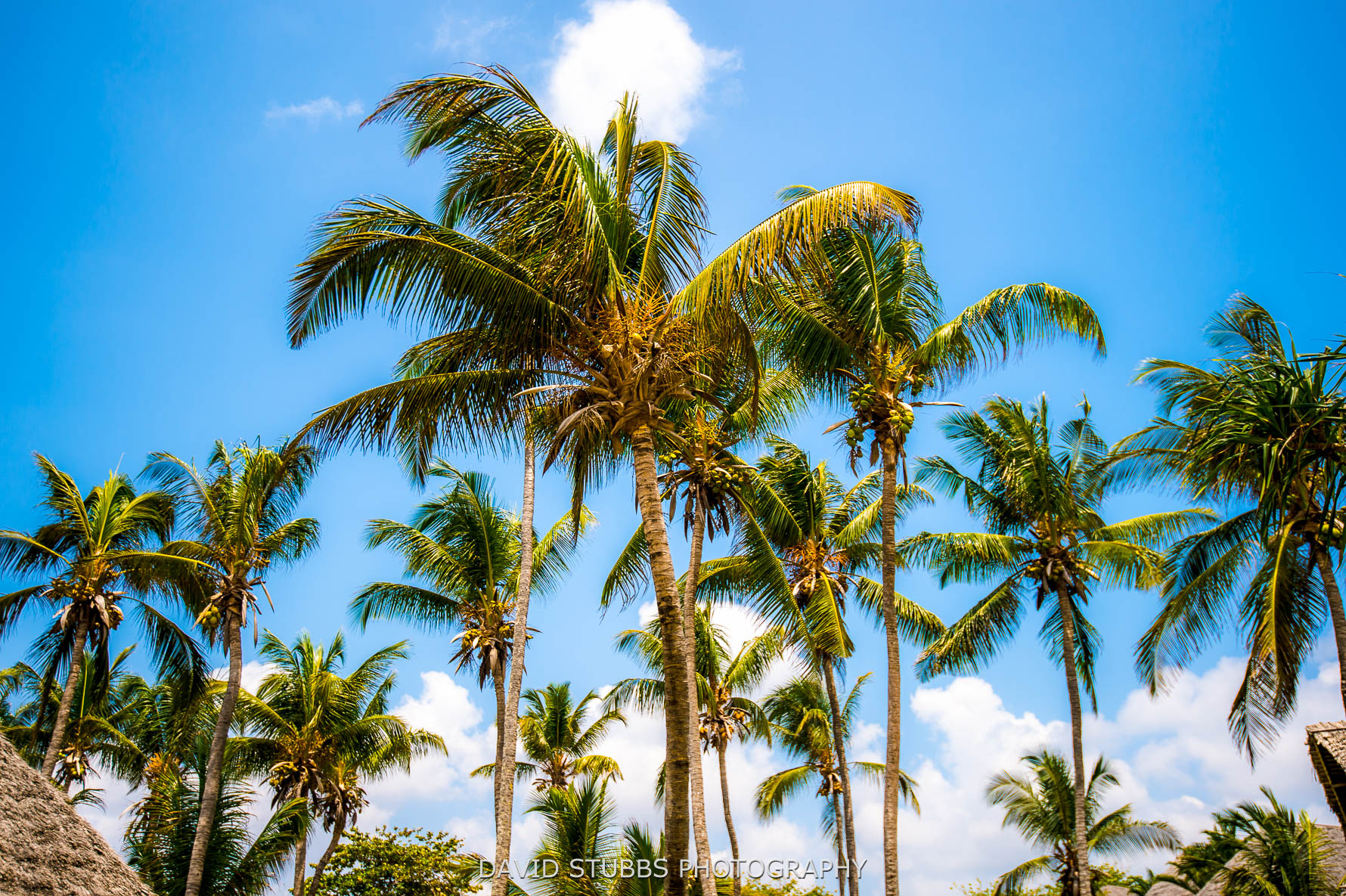 palm trees in colour