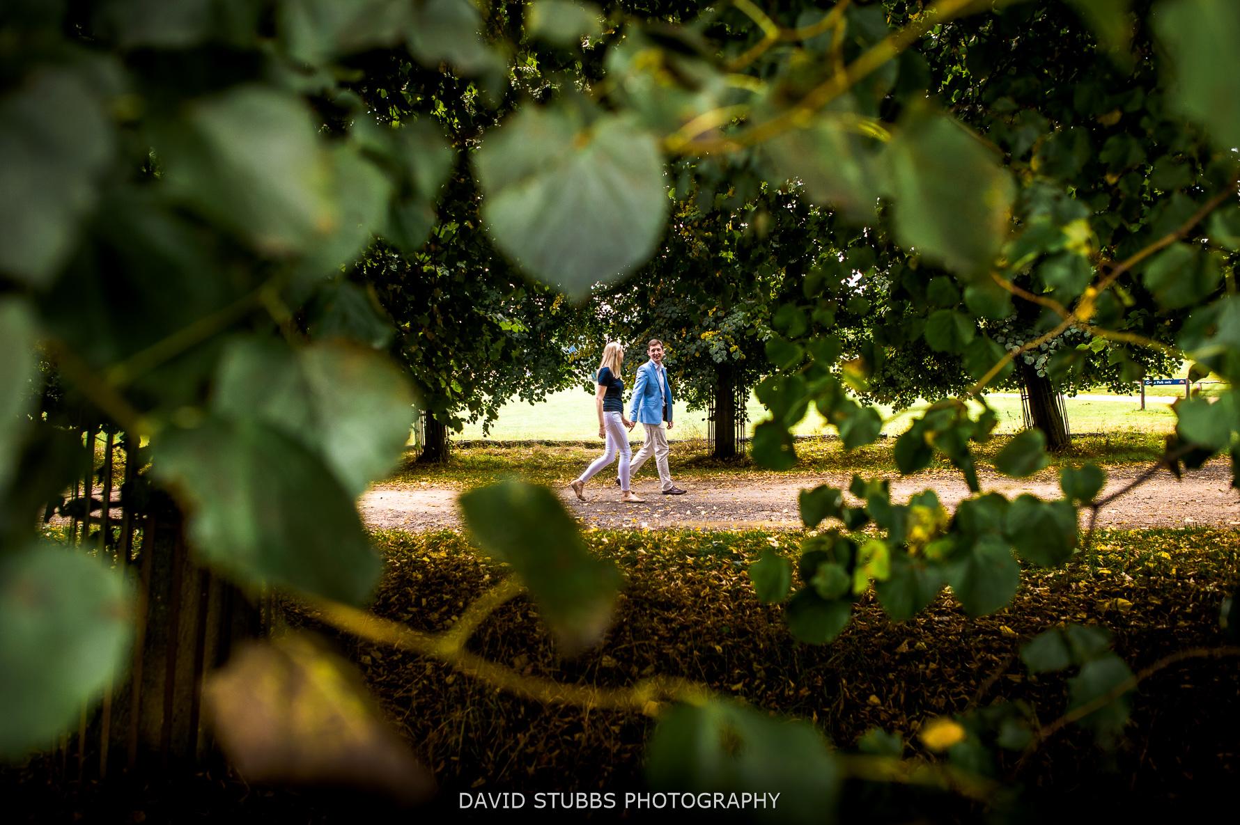 walking betwene trees in great light
