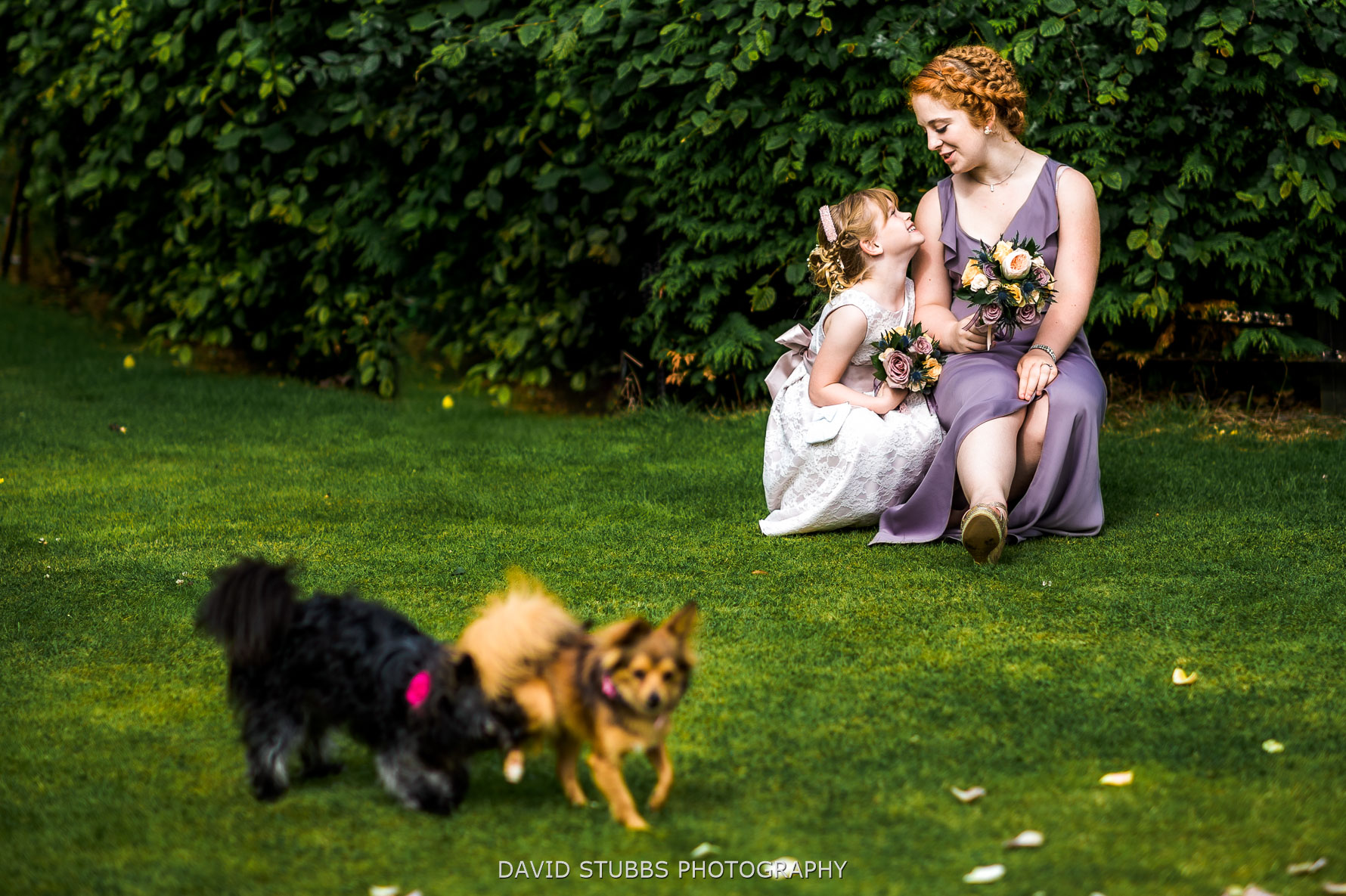 dogs outdoor wedding