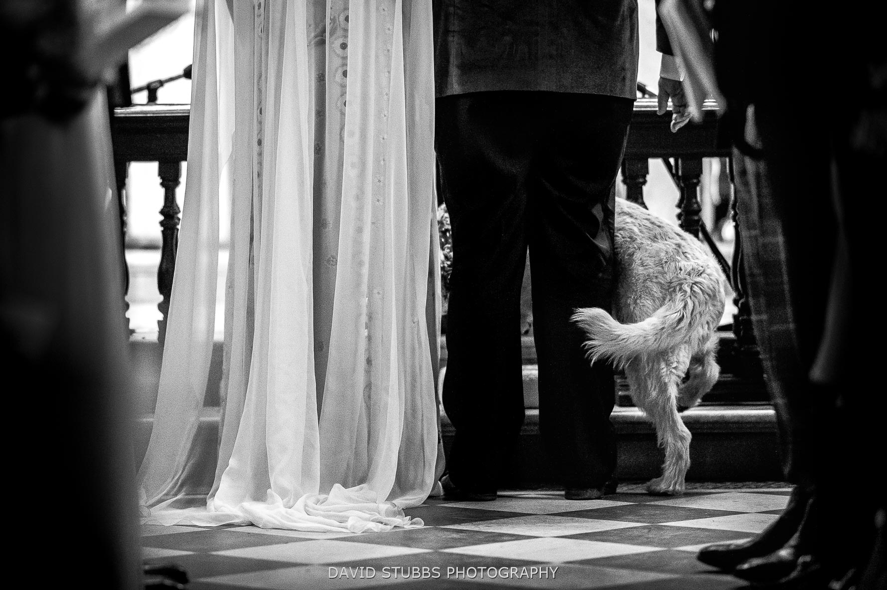 dog climing betwene bride and groom during ceremony