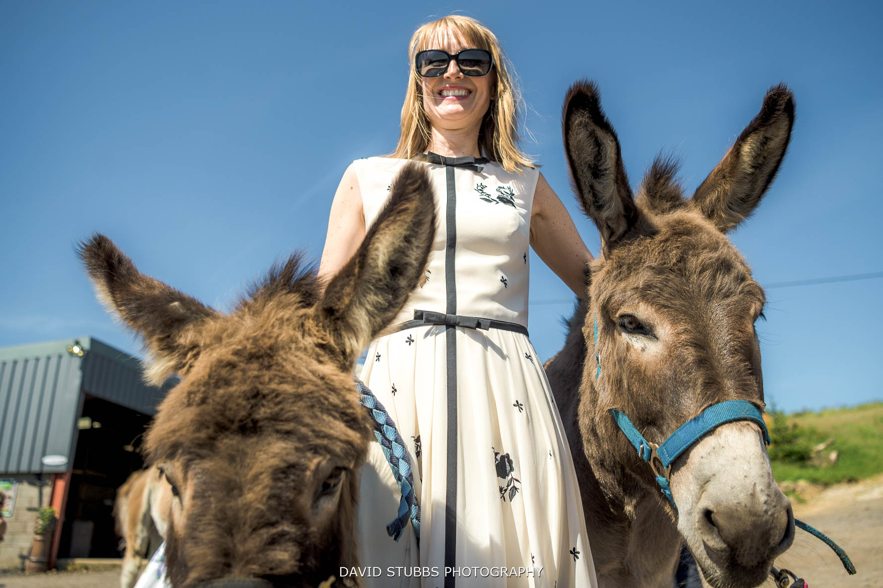 donkeys with wedding guests