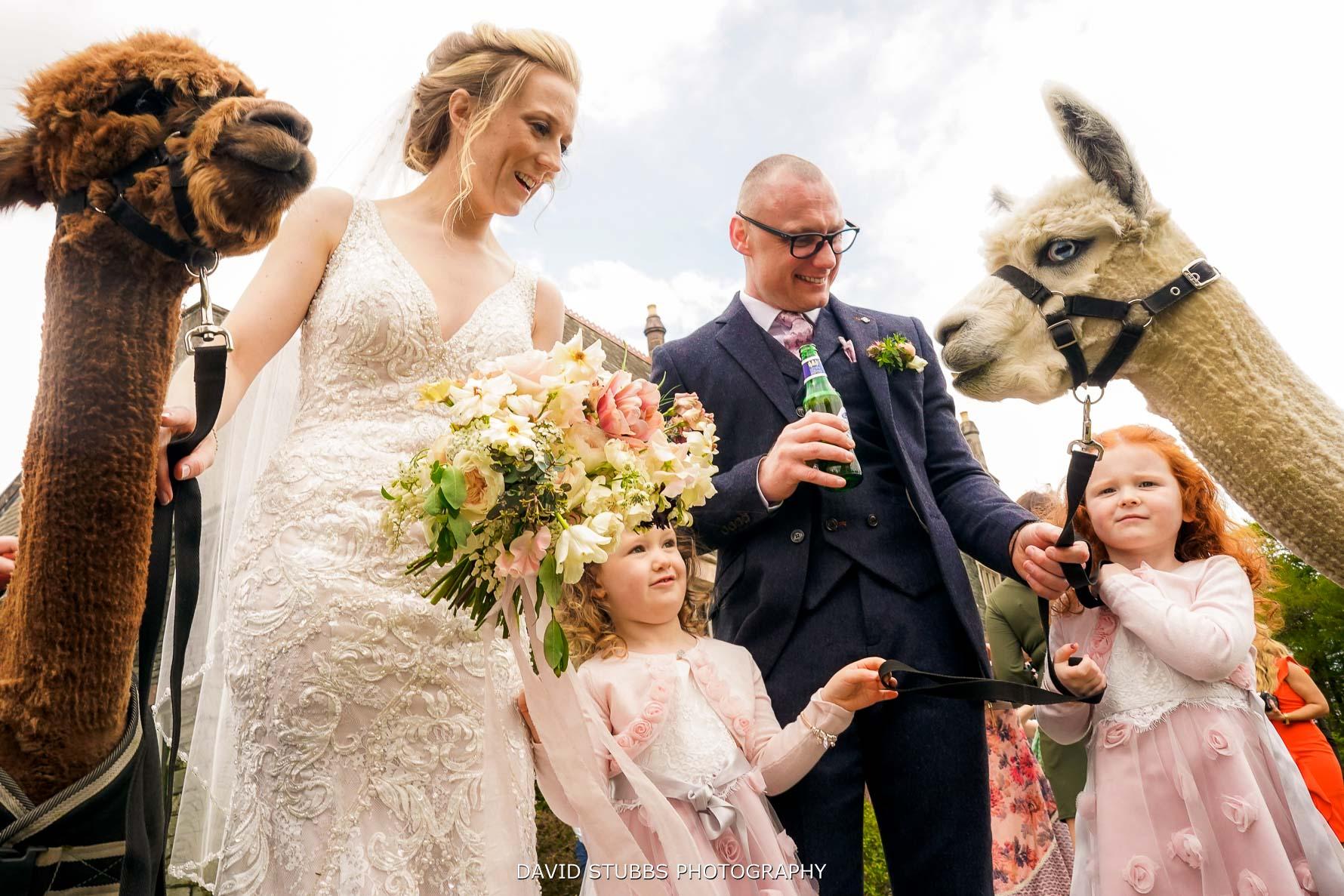 wedding llamas at lingholm estate