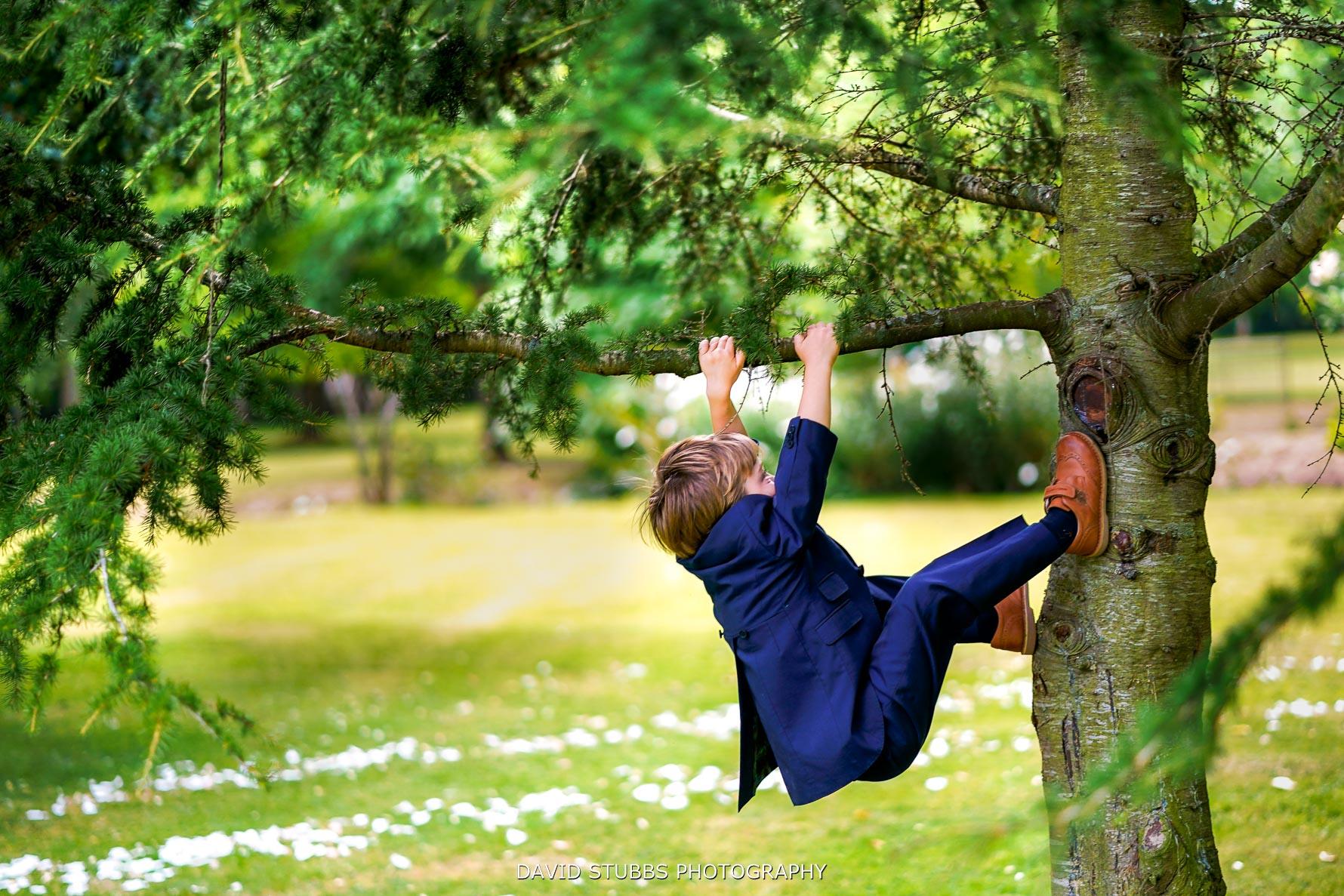 climbing trees in the garden