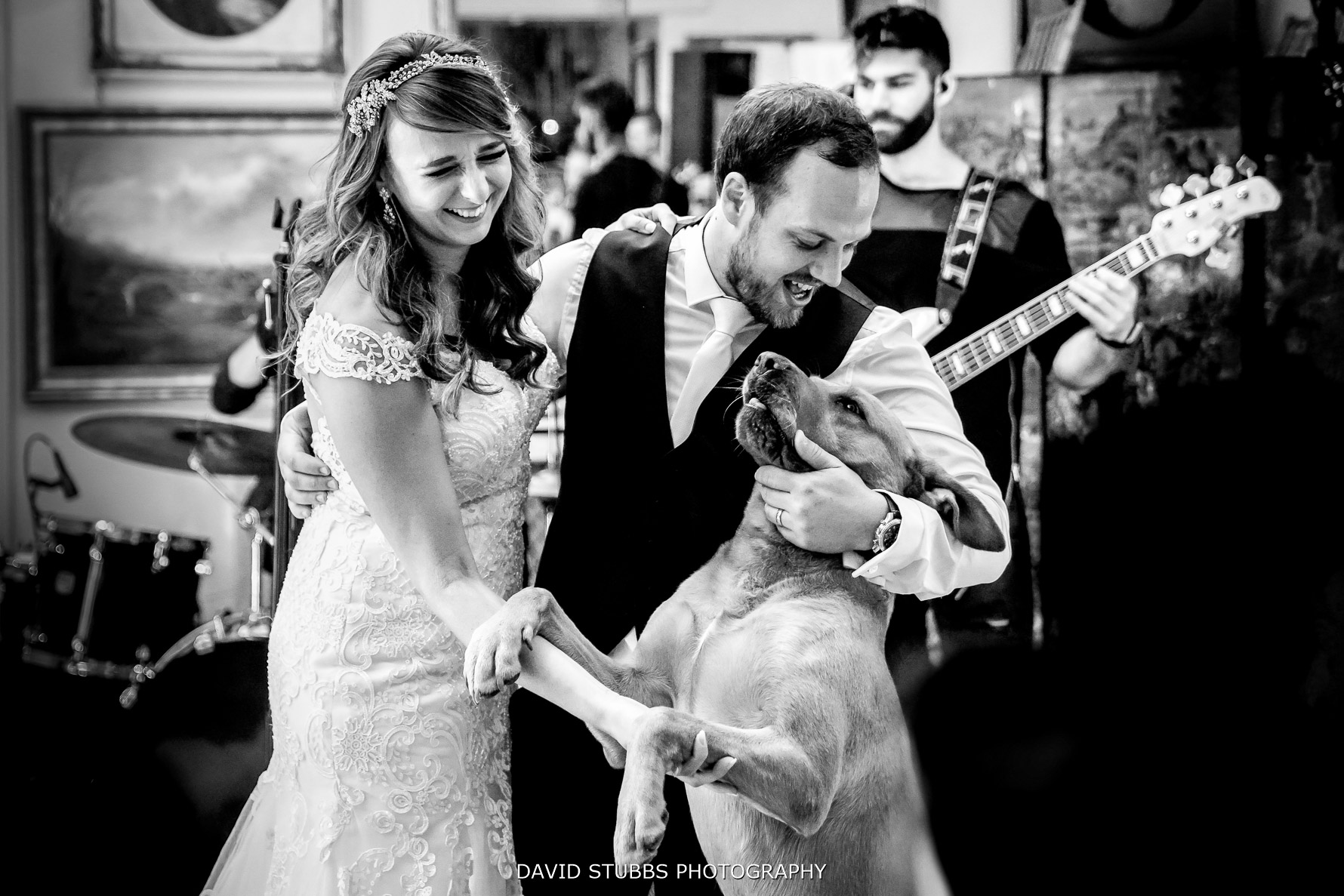 dog during first dance