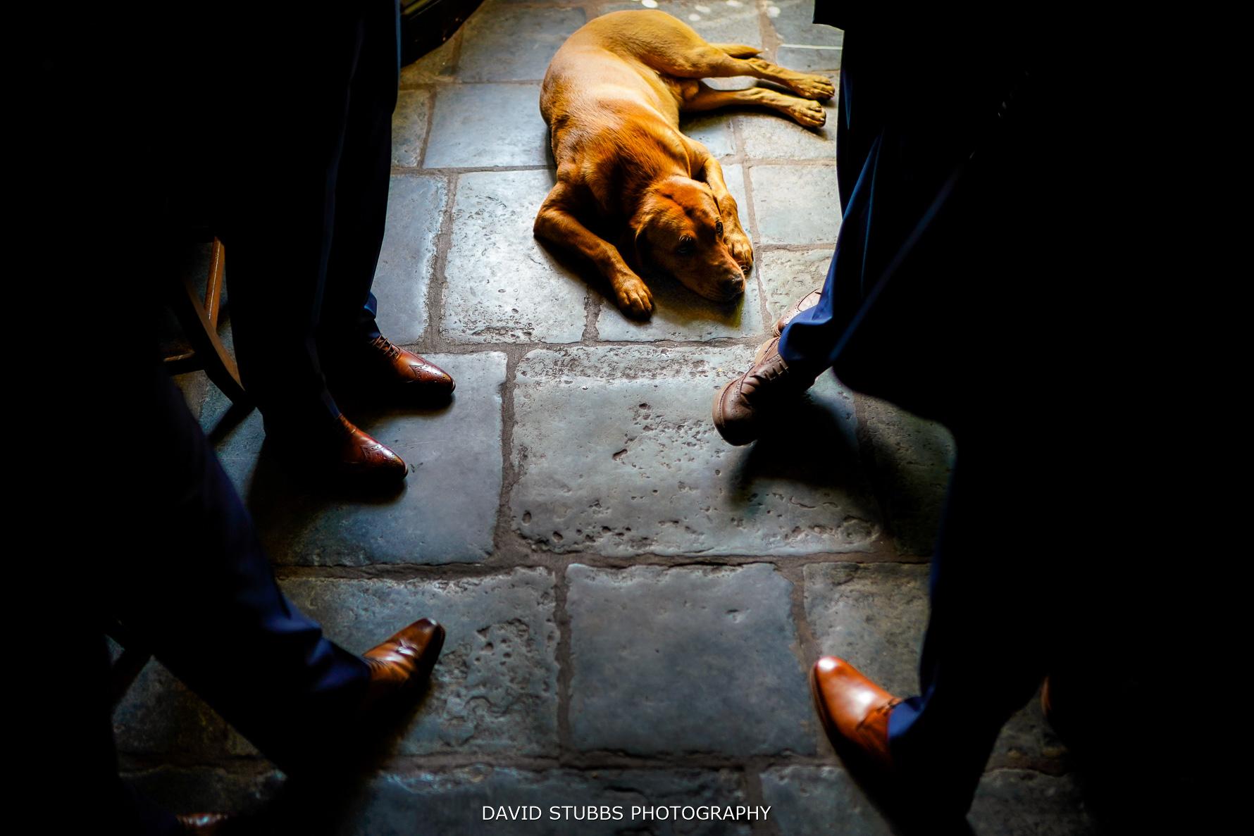 dog sitting between groomsmen legs